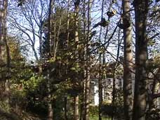 Trees on proposed development site