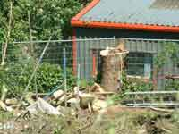 Trees which would have screened the Materials Recovery Facility were felled by Carelet