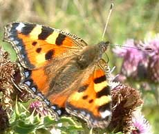 Sussex Downland provides a rich habitat for many species of butterfly